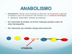 Ejemplos de anabolismo
