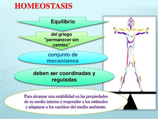 Ejemplos de homeostasis