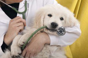 cuidados a una mascota