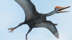 ejemplos de dinosaurios voladores